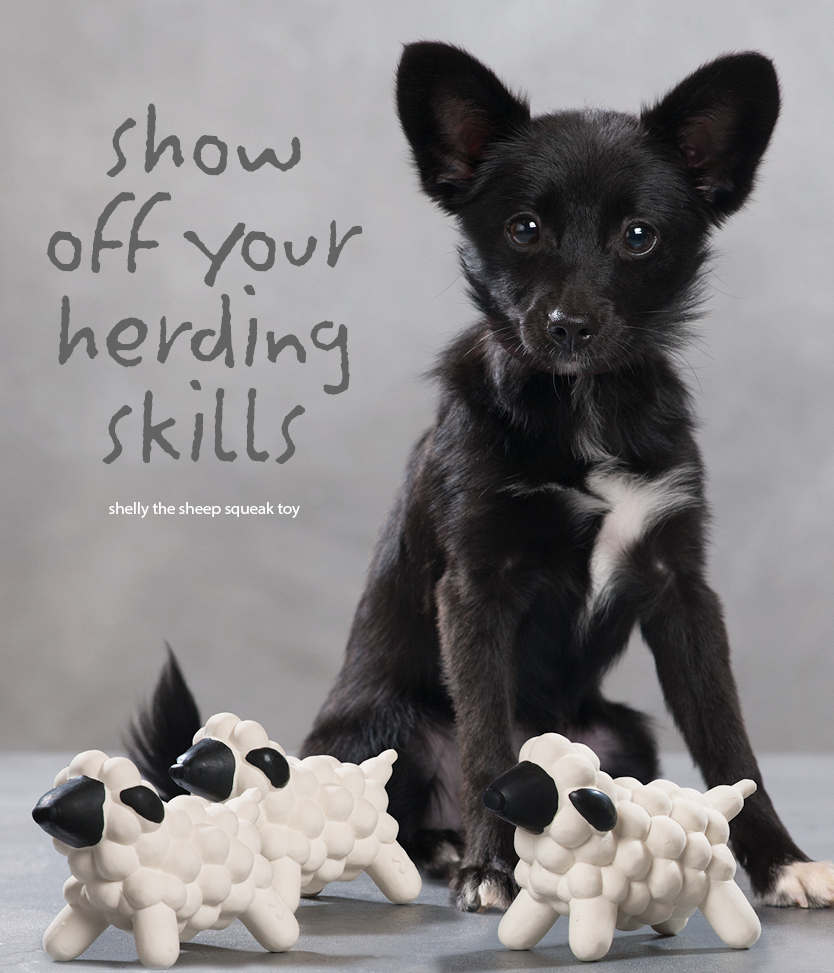 show off your herding skills, Shelley The Sheep Squeak Toy