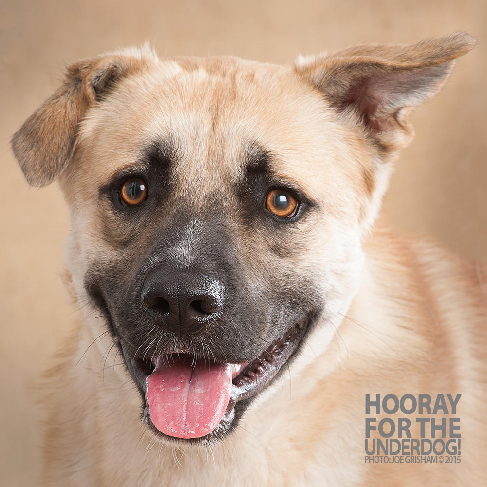 Find A Dog A Home Photo Shoot September 2015 Hooray