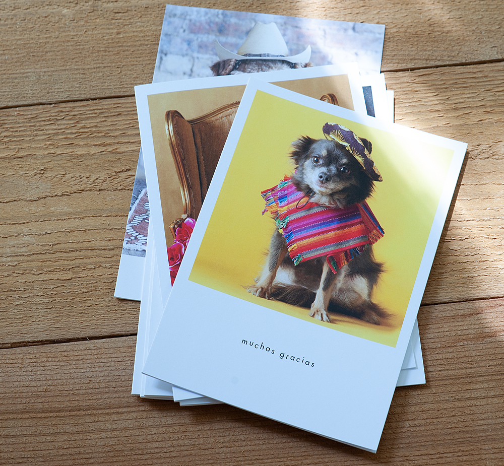 Thank You Cards From Hooray For The Underdog!